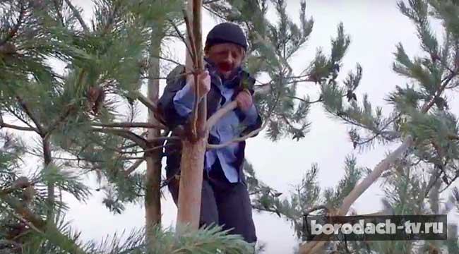 Бородач на дереве